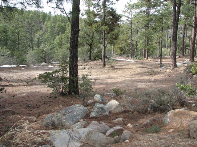 Camping: Backway to Crown King, Arizona