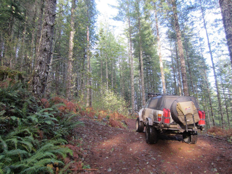 Highlight: Lyda Hill #100 / Tillamook State Forest